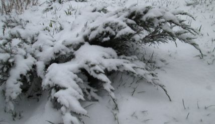Снегопад 28 марта, за три дня до апреля