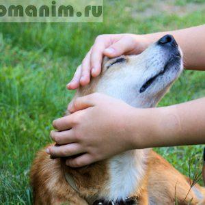 10 признаков того, что собака вас любит