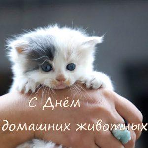 День домашних животных в России